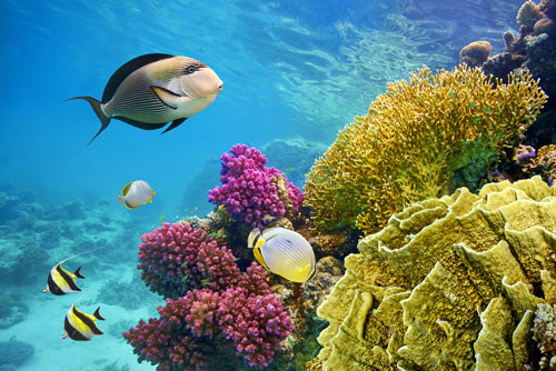 Coral Dome